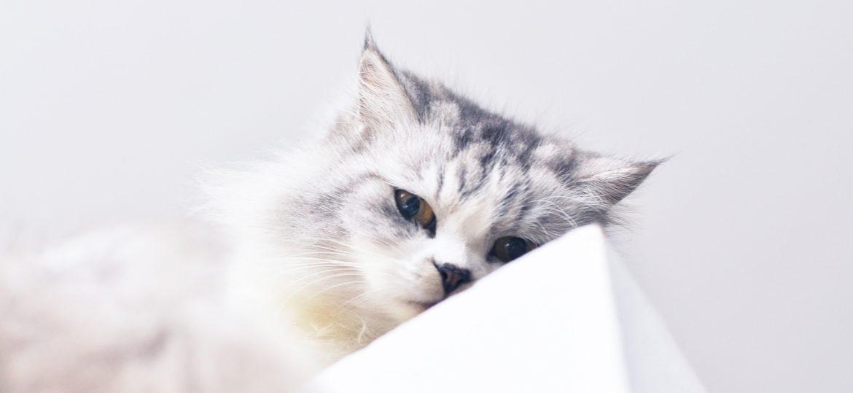 Анонс. Депутаты заставят котят молчать